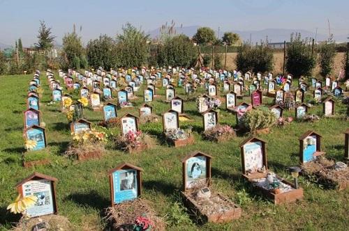 Il Cimitero per gli animali d'affezione