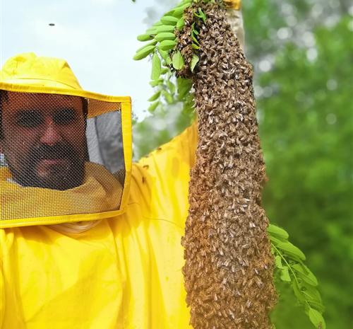 Cosa fare se troviamo uno sciame di api?