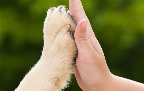 Punto 5: difesa strenua degli animali
